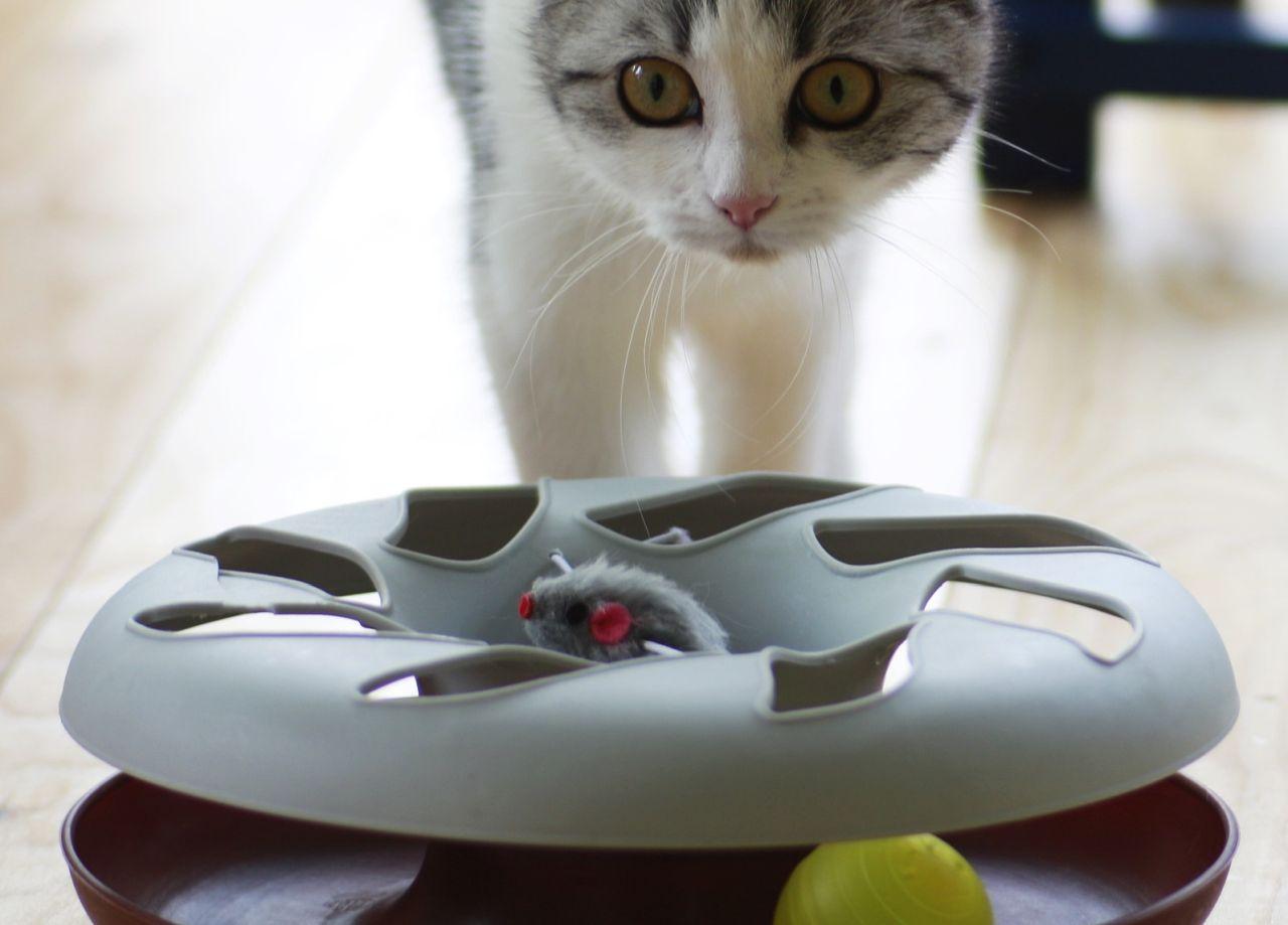 akcesoria-zabawki-dla-zwierzat-04-kot