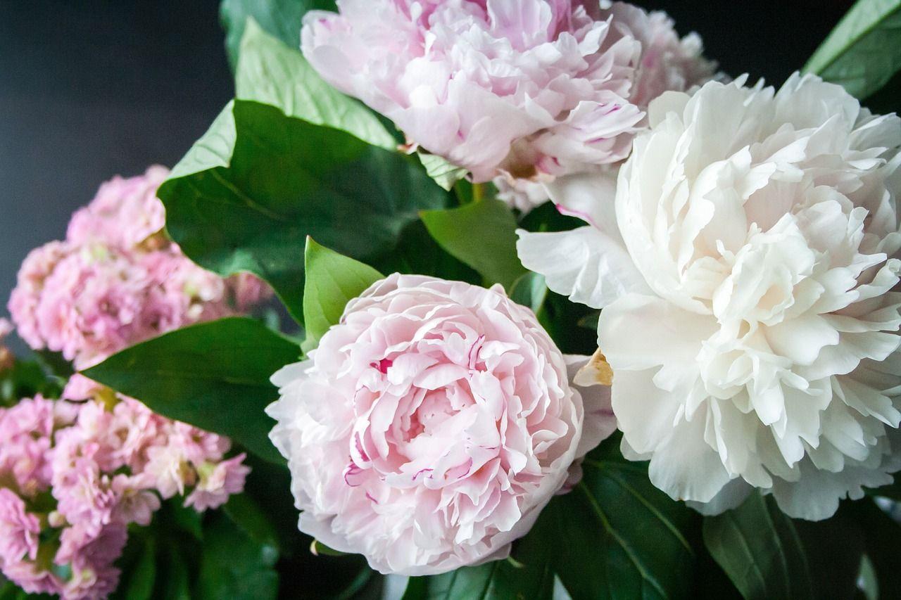 piwonia-kwiaty-bukiet